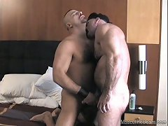 Hungry for cock, these hairy gay guys go to work sucking on each other\\\'s peckers